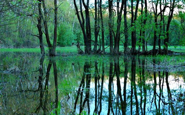 Lužné lesy